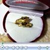 แหวนโลมาสองตัว ทอง2microns
