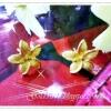 ต่างหูทองสวิส ซาติน/gold plated 1microns