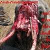 """""""อย่ามายุ่งกับอวัยวะของฉัน"""" จากบทความของ ลีโอนาโด ใครฆ่าช้าง"""