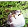 แหวนเพชรสองแถว gold plated 5microns/white gold plated