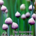 หนังสือ Biobeam for Entrance : The Ecosystem