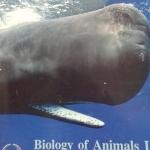 หนังสือ Biobeam ICU Course : Biology of Animals 1 (พร้อมเฉลย)