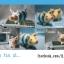 แพทเทิร์นตุ๊กตาถักหมูน้อย Poogie Pig thumbnail 2