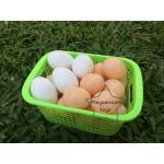 PS-4028 ชุด ไข่เป็ด ไข่ไก่ จำลอง