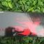ไฟหน้าจักรยาน Solar strom X2 LED CREE XML-T6 2400 lumen thumbnail 5